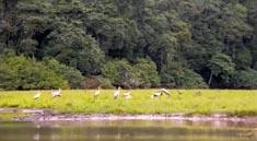 非洲旅遊–加蓬野生動物國家公園