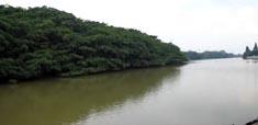 岭南水乡旅游 - 新会小鸟天堂