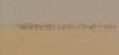 沙漠旅游–撒哈拉沙漠盐户