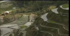 菲律賓旅遊–水稻梯田