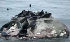 俄罗斯旅游 - 世界最深的湖泊贝加尔湖
