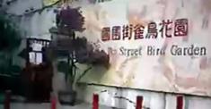 香港旅遊 - 園圃街雀鳥花園