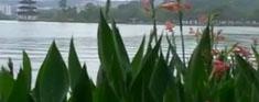 惠州旅游 - 惠州西湖