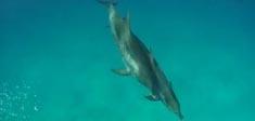 新西兰旅游 – 与海豚共舞